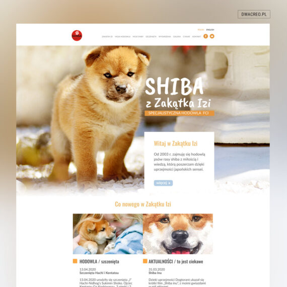 Psy www 1080x1080 1 570x570 - STRONA INTERNETOWA HODOWLI SHIB